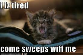 Tired Cat Meme - tired cat memes image memes at relatably com