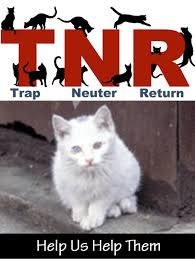 Cat Trap Meme - spca albrecht center for animal welfare trap neuter return