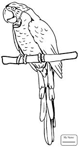 coloring pages kids budgerigar parrot parrots birds