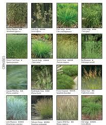 443 best ornamental grasses images on landscaping