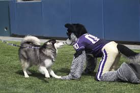 state with most dog owners 2016 husky mascot dubs and harry the husky washington huskies