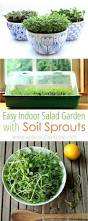 451 best microgreens and sprouts images on pinterest gardening