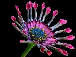 free photo beautiful flowers bed of flowers basket max pixel