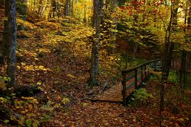 West Virginia forest images File fall foliage forest foot trail bridge west virginia jpg