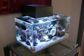 fluval edge marine light fluval edge nano reef nano reef aquariums pinterest aquariums