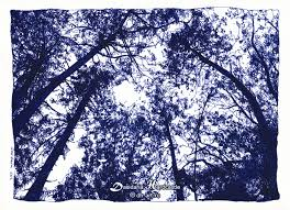 blue trees by dasidaria on deviantart