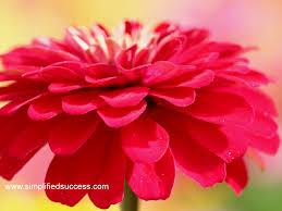 Cute Flower Wallpapers - flower wallpaper for desktop download free wallpapers for pc
