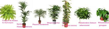 plantes dépolluantes chambre à coucher galeries d en plantes depolluantes chambre à coucher plantes