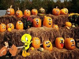 looney tunes tweety happy thanksgiving wallpaper free