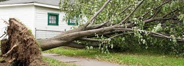 tree care by stan hunt tree and lawn care services