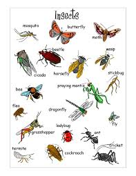 insect printables for kids bugs pinterest vocabulary