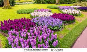 gardens stock images royalty free images u0026 vectors shutterstock