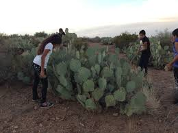 native american food plants tradition u0026 technology san carlos apache tribe u0027s food database