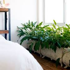 plants to grow indoors easy care indoor plants sunset