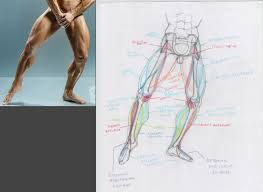 artistic anatomy draw like the old masters uartsy