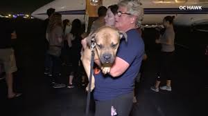 California Wildfire Animal Rescue by Santa Monica Animal Rescue Organization Brings Dogs Displaced By