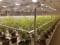 ebb u0026 flow cannabis bench systems