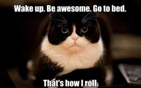 Good Cat Meme - 14 cat memes that will help you celebrate the best day of the year
