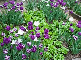 flowers for vegetable garden edible landscaping growing your own food hgtv