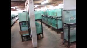local goverment ornamental fish farming project by marine reef