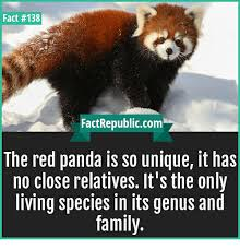Red Panda Meme - the red panda spends nearly all of its adult life alone just like