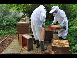 Harvesting Honey From A Top Bar Hive How To Harvest Honey From A Beehive Youtube