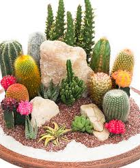 Indoor Cactus Garden Ideas Zulily Something Special Every Day Outside Garden Pinterest