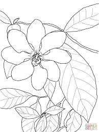 cape jasmine gardenia jasminoides coloring page free printable