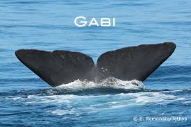 befriend a whale or donate its friendship to someone you love