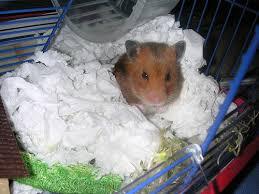 Hamster Bed Maktaaq