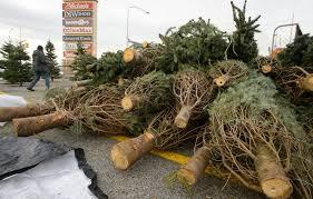 tree shortage driving up prices putting some utah tree