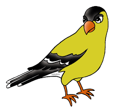 New Jersey birds images Goldfinch clipart new jersey state pencil and in color goldfinch png