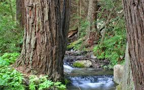 wallpaper 1920x1200 wood trees trunks water
