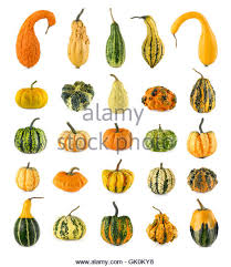 ornamental pumpkin and bottle gourd stock photos ornamental