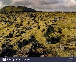 green moss on black lava rock in front of a volcano in a large