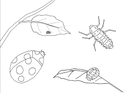 amazing free printable aphids insect coloring pages kids
