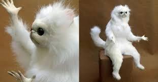 Persian Cat Meme - nyan hysterical persian cat room guardian memes that will speak to
