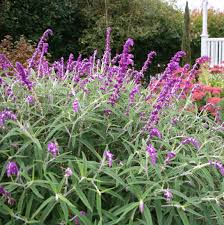 Flowers For Backyard by 100 Flowers For Backyard Easy Growing Flowers For Fences