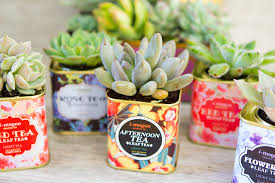 vintage tea tin succulents u2013 sisoo