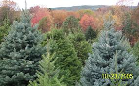 christmas tree farm in fall christmas pinterest christmas