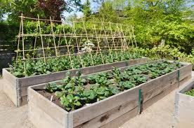 strikingly how to start a home garden vegetable grow your own