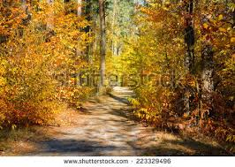 fall forest stock images royalty free images u0026 vectors shutterstock
