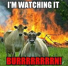 Stupid Animal Memes - more stupid meme hamilton amino