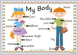 parts of the body explained for children body and organs ks1
