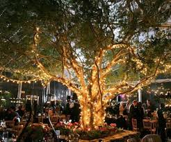 how to decorate outdoor trees with lights 5 ideas for impressive