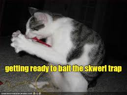 Cat Trap Meme - getting ready to bait the skwerl trap lolcats lol cat memes