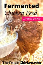 Raising Meat Chickens Your Backyard by The 2245 Best Images About Chicken Backyard On Pinterest Chicken