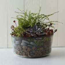 antique glass bowl planter terrain