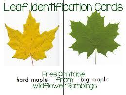 montessori tree printable leaf identification cards free printable wildflower ramblings