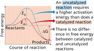The Amount Of Light And Temperature Are Examples Of Reactions U0026 Enzymes